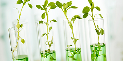 Fera provides scientific expertise alongside 16 European organisations on the Valitest project to support plant health