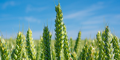 Feeding the future: Can we protect crops sustainably?