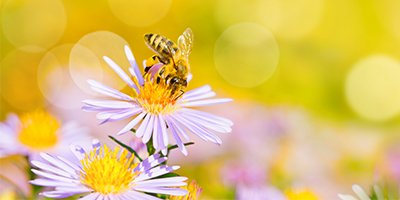 Fera's experts create a buzz for Scottish honey