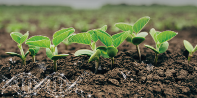 Fera Science Welcomes Defra's Response to the Public Consultation on Novel Genetic Technologies