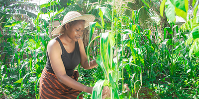 Fera - Stepping-up for African plant health and biosecurity