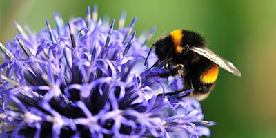 ICPPR Bee Brood Working Group