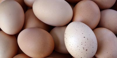 Fera adapt their accredited LC-MS/MS technique to detect for Fipronil in eggs.