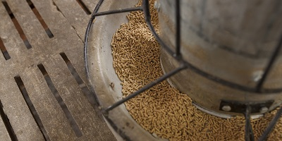 Insects no more risky than other proteins as animal feed