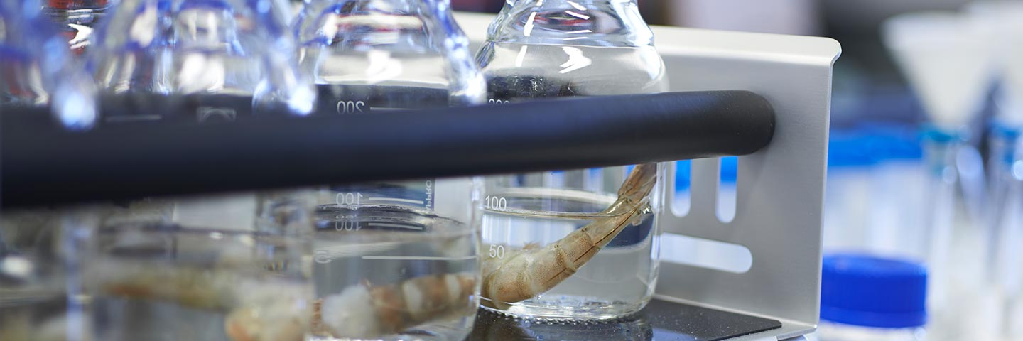 New test can find amount of 'added' phosphates in prawns