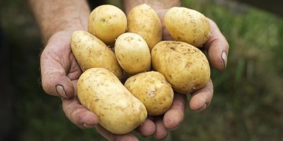 British Potato 2017 -  22 -23 November 2017, Harrogate