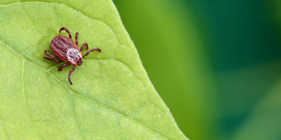 Mite Monitoring and Pest Management from Fera