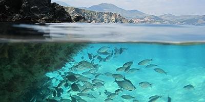 New endocrine-disruptor regulations put aquatic testing at the top of the agenda
