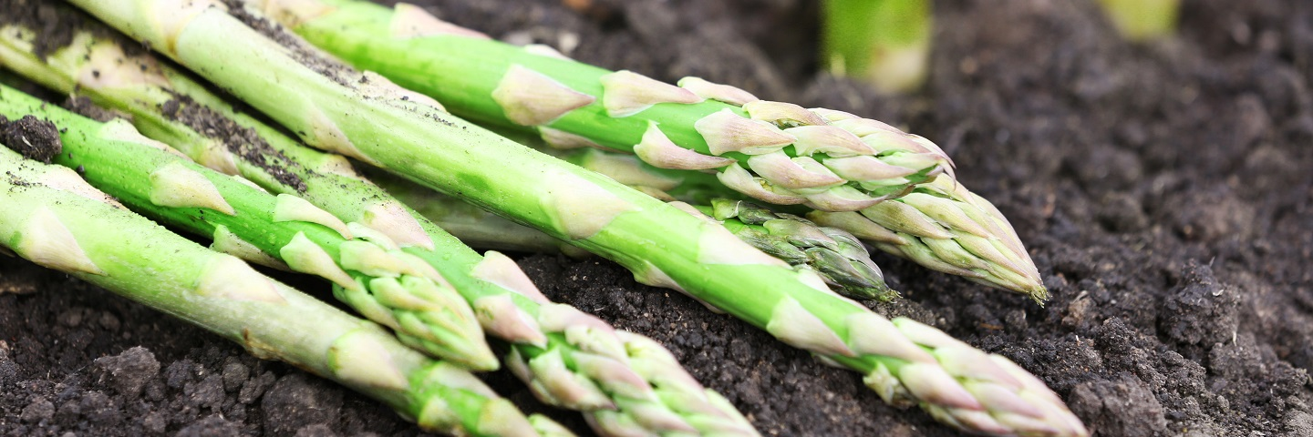 Soil bait tests for asparagus or hops (only): Phytophthora (except Phytophthora fragariae) and Fusarium