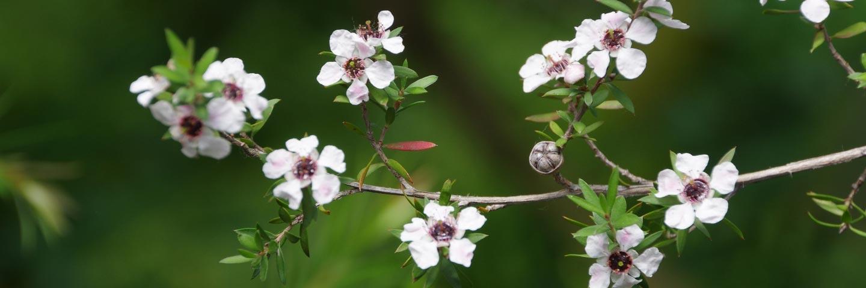 Manuka Honey: Microbiological Testing (TA & NPA) - Priority Turnaround