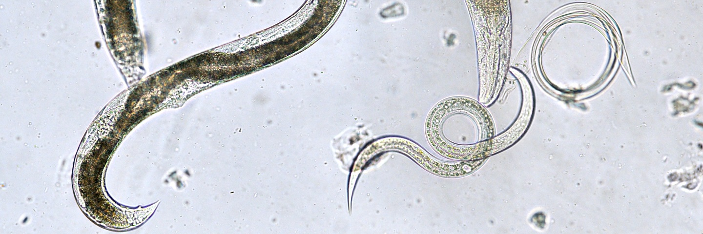 General free-living plant-parasitic nematodes from soil: Basic