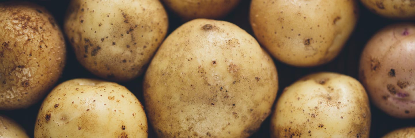 Rapid direct tuber test for virus in Potato (PVY)