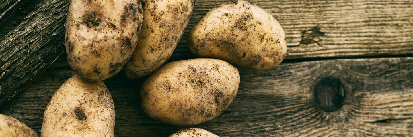 Image for Potato brown rot & ring rot (Official EU Protocol) - Ralstonia solanacearum & Clavibacter michiganensis subsp. sepedonicus