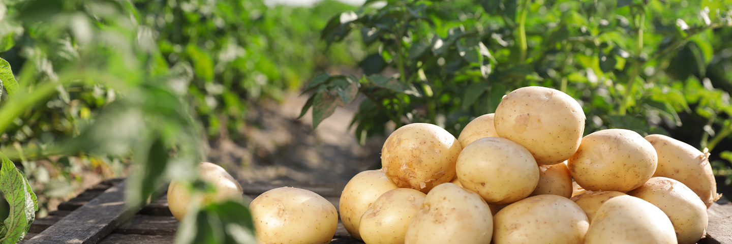 Analysis of sprout suppressants in potatoes