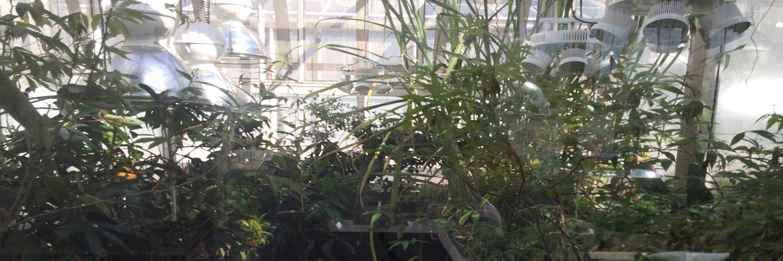Plant Metabolism Studies