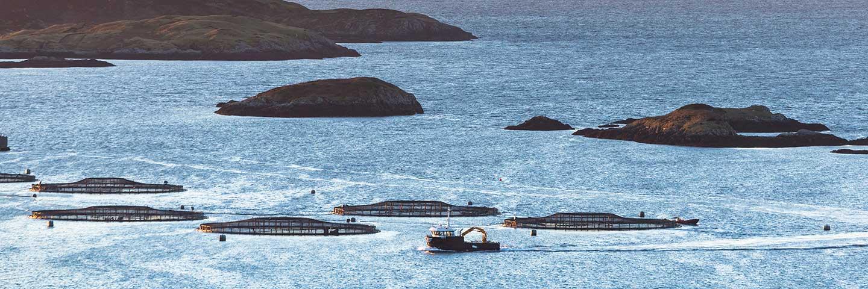Fish Seafood & Aquaculture