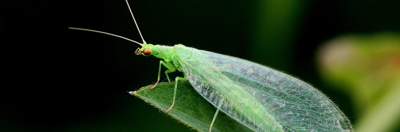 Terrestrial Non-Target Arthropod Studies