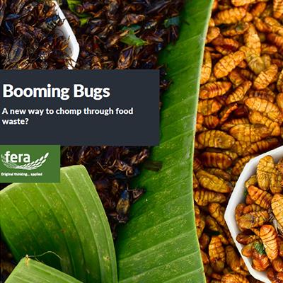 Booming Bugs
