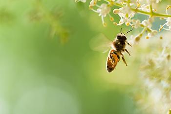 Bee Ecotoxicology