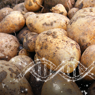 Potato Virus Testing Webinar