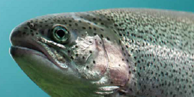 fish acute toxicity test