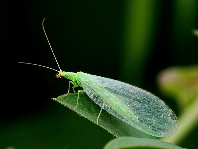 Insect Close Up 1
