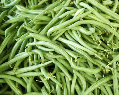 Bean blight seed test - Xanthomonas axonopodis pv. phaseoli