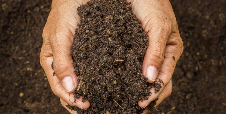 Extreme Close Up Soil