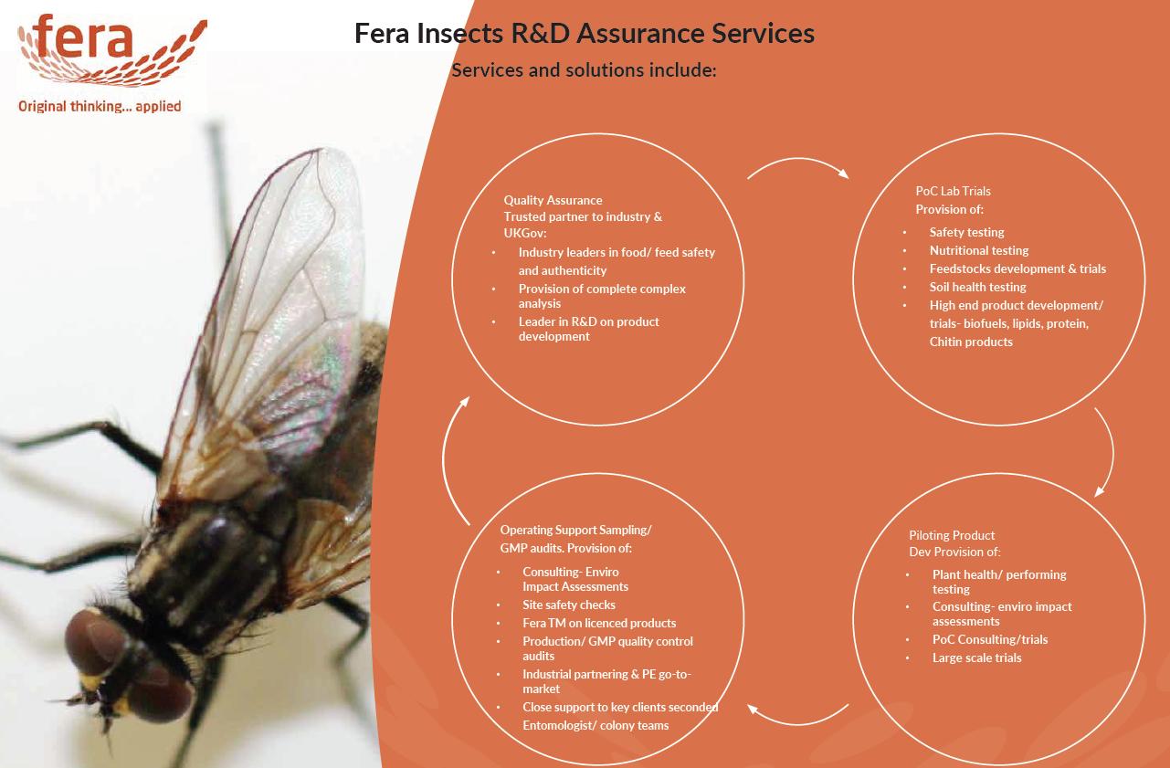 Fera's Services